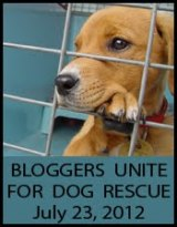 Help Us get the Word out to Rescue the Lives of Millions of Dogs